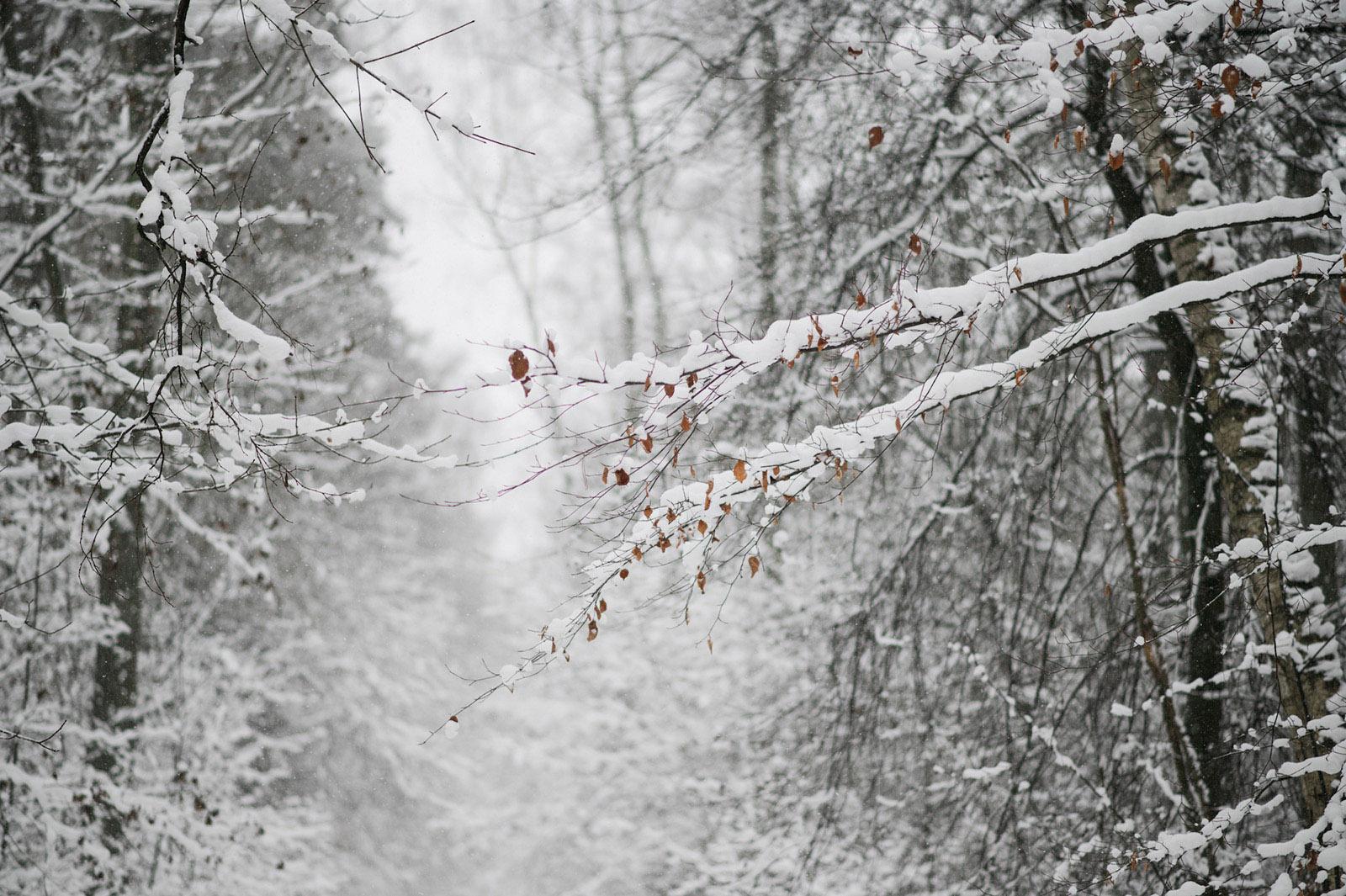 zimowa sesja narzeczenska6